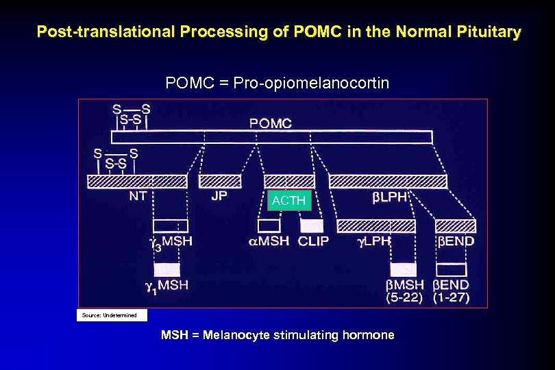 Post-translational Processing of POMC in the Normal Pituitary POMC = Pro-opiomelanocortin ACTH Source: Undetermined