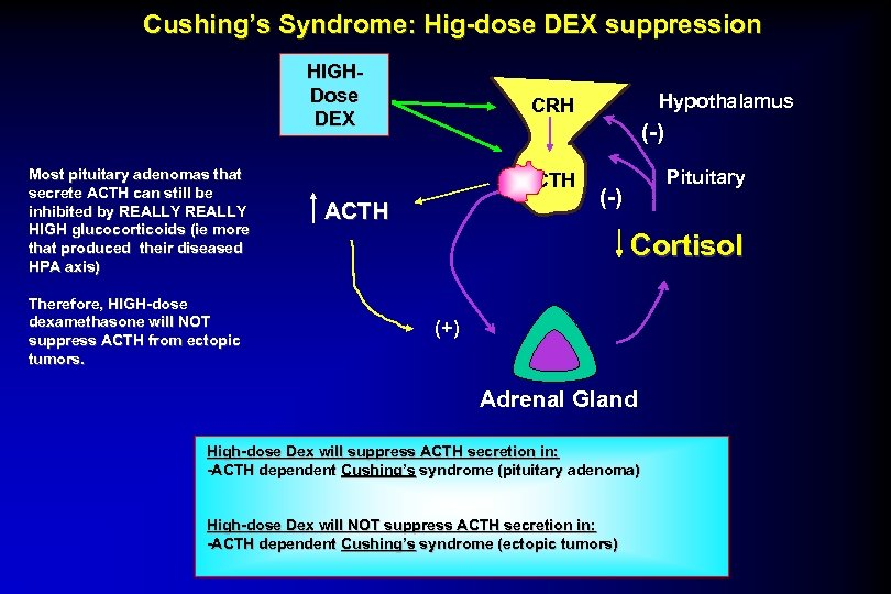 Cushing's Syndrome: Hig-dose DEX suppression HIGHDose DEX Most pituitary adenomas that secrete ACTH can