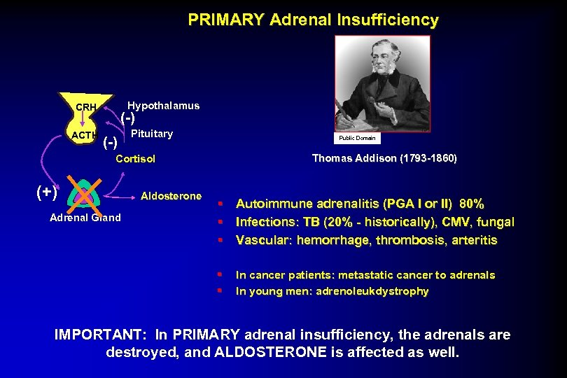 PRIMARY Adrenal Insufficiency Hypothalamus CRH ACTH (-) Pituitary Public Domain Thomas Addison (1793 -1860)