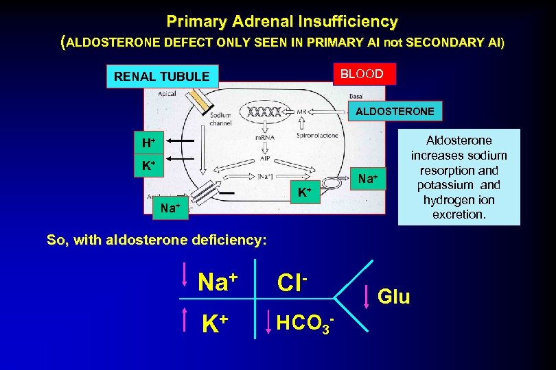 Primary Adrenal Insufficiency (ALDOSTERONE DEFECT ONLY SEEN IN PRIMARY AI not SECONDARY AI) BLOOD