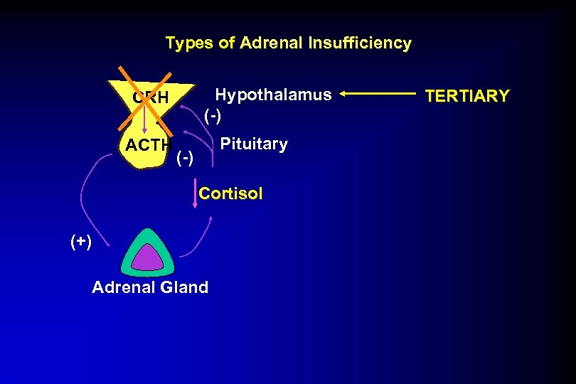 Types of Adrenal Insufficiency Hypothalamus (-) CRH ACTH Pituitary (-) Cortisol (+) Adrenal Gland