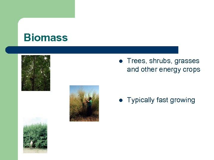 Biomass l Trees, shrubs, grasses and other energy crops l Typically fast growing