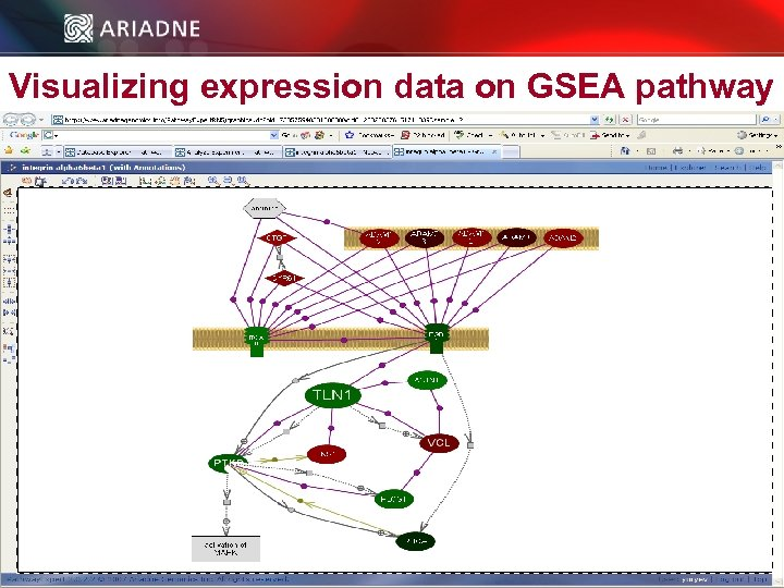 Visualizing expression data on GSEA pathway © 2006 Ariadne Genomics. All Rights Reserved. 46