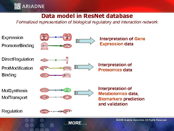 Data model in Res. Net database Formalized representation of biological regulatory and interaction network