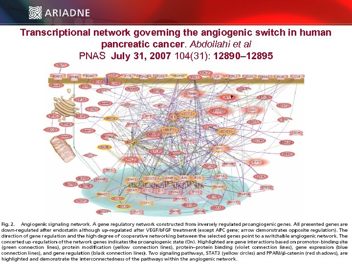 Transcriptional network governing the angiogenic switch in human pancreatic cancer. Abdollahi et al PNAS