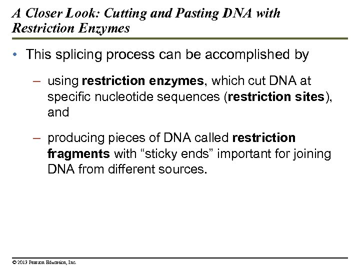 A Closer Look: Cutting and Pasting DNA with Restriction Enzymes • This splicing process