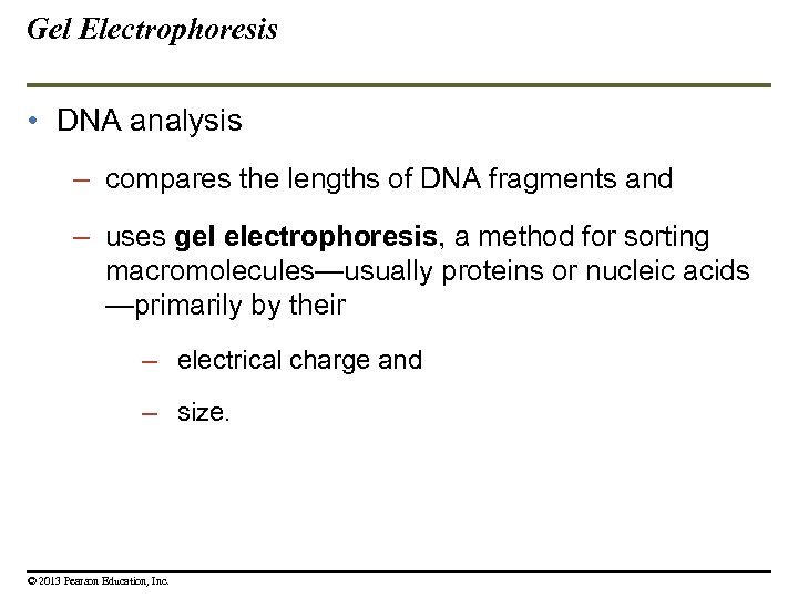 Gel Electrophoresis • DNA analysis – compares the lengths of DNA fragments and –