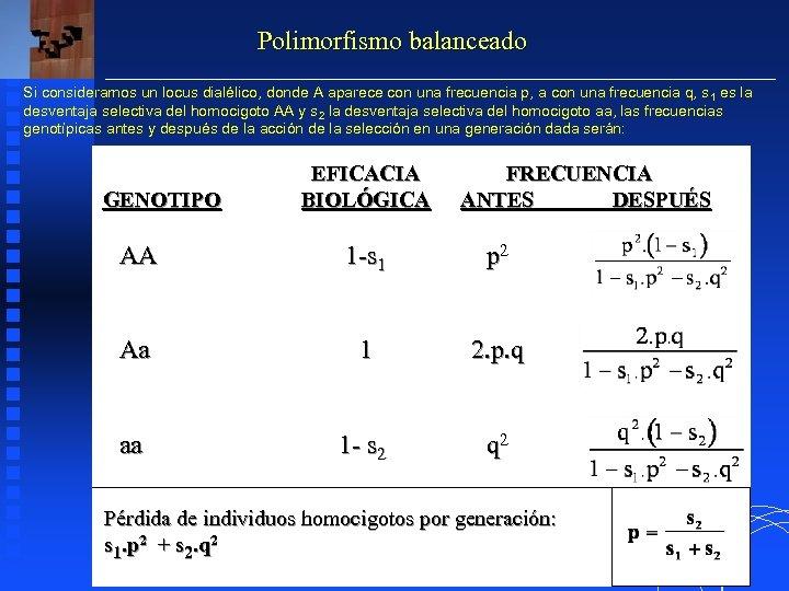 Polimorfismo balanceado Si consideramos un locus dialélico, donde A aparece con una frecuencia p,