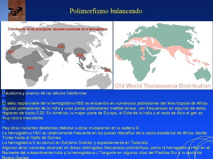 Polimorfismo balanceado Distribución de las principales variantes anormales de la hemoglobina Hb. D Hb.