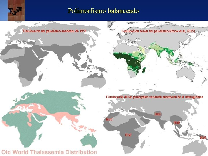 Polimorfismo balanceado Distribución del paludismo alrededor de 1950 Distribución actual del paludismo (Snow et