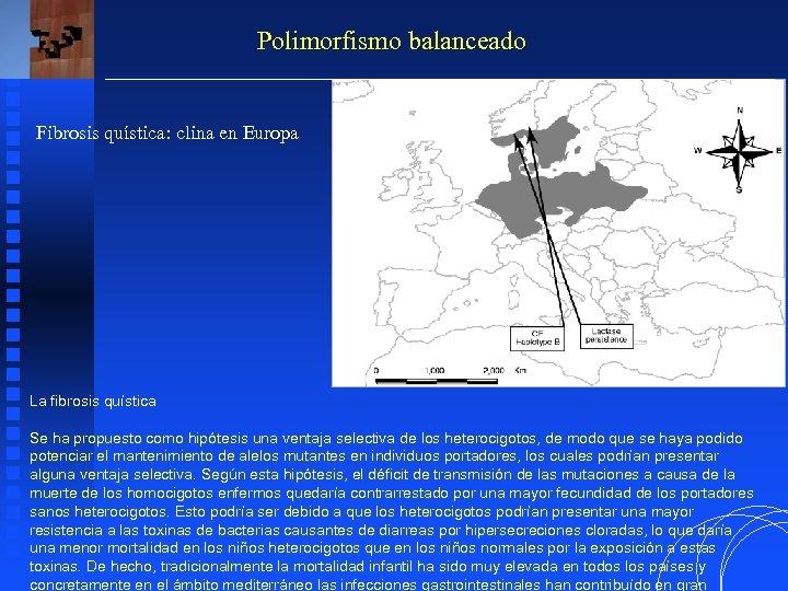 Polimorfismo balanceado Fibrosis quística: clina en Europa La fibrosis quística Se ha propuesto como