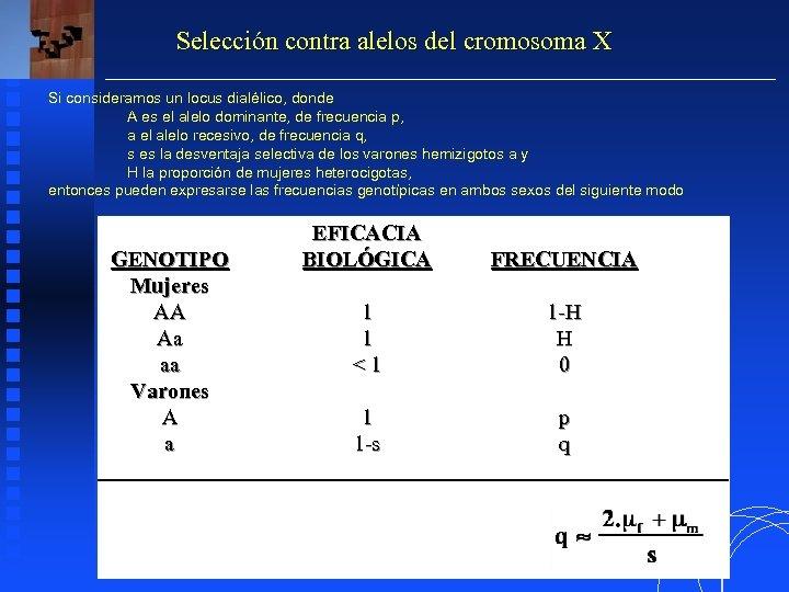 Selección contra alelos del cromosoma X Si consideramos un locus dialélico, donde A es