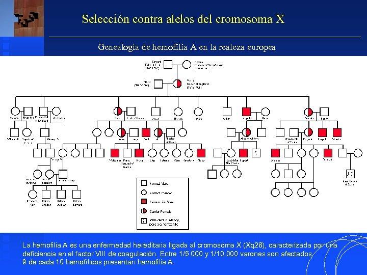 Selección contra alelos del cromosoma X Genealogía de hemofilia A en la realeza europea