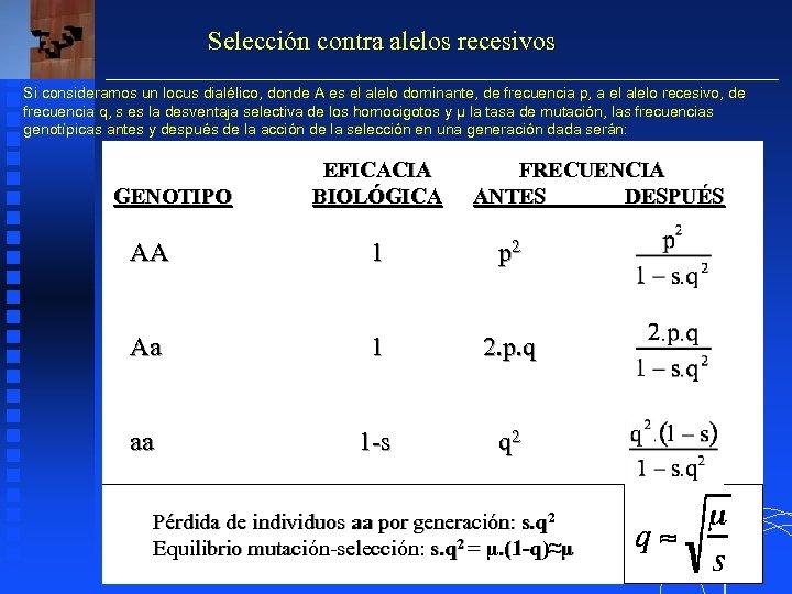 Selección contra alelos recesivos Si consideramos un locus dialélico, donde A es el alelo