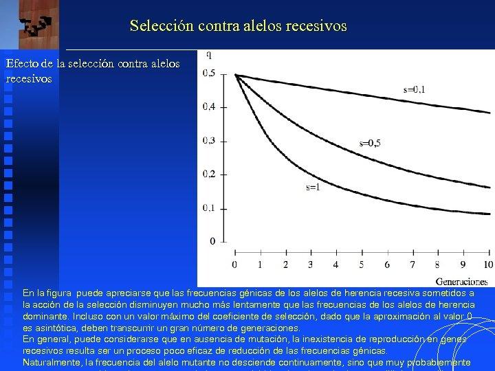Selección contra alelos recesivos Efecto de la selección contra alelos recesivos En la figura