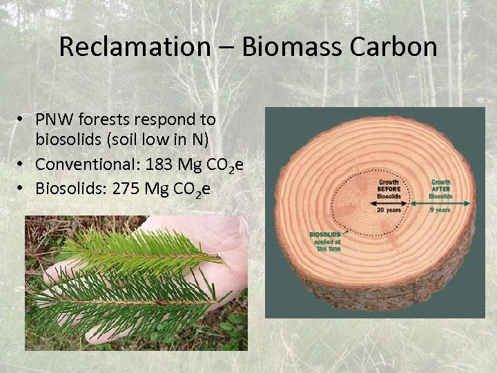 Reclamation – Biomass Carbon • PNW forests respond to biosolids (soil low in N)