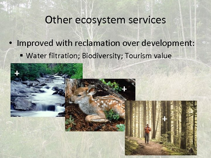 Other ecosystem services • Improved with reclamation over development: § Water filtration; Biodiversity; Tourism
