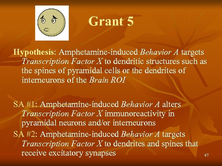 Grant 5 Hypothesis: Amphetamine-induced Behavior A targets Transcription Factor X to dendritic structures such