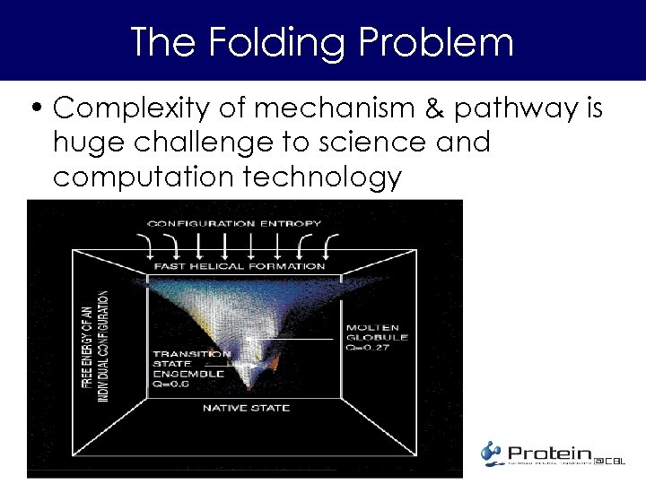 The Folding Problem • Complexity of mechanism & pathway is huge challenge to science