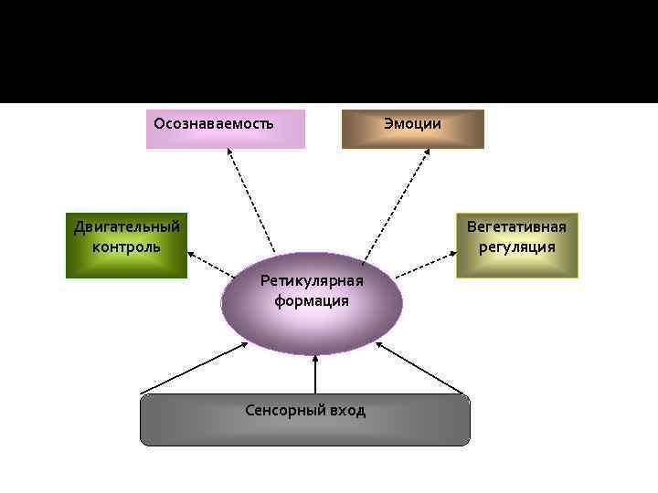Осознаваемость Двигательный контроль Эмоции Вегетативная регуляция Ретикулярная формация Сенсорный вход