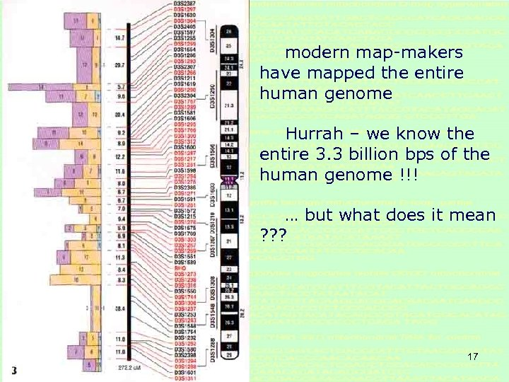 modern map-makers have mapped the entire human genome Hurrah – we know the entire