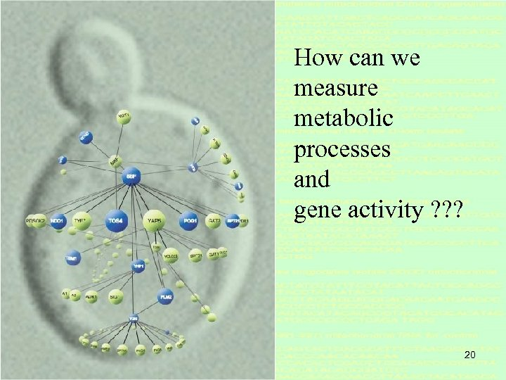 How can we measure metabolic processes and gene activity ? ? ? 20