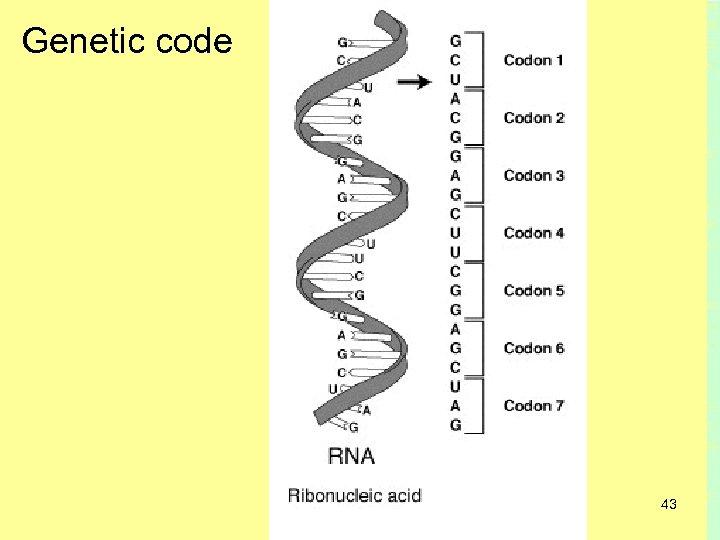 Genetic code 43