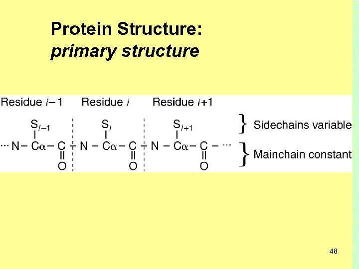 Protein Structure: primary structure 48