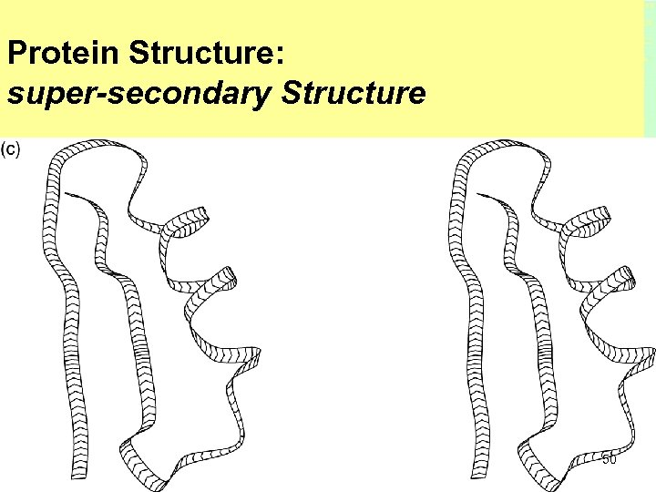 Protein Structure: super-secondary Structure 50