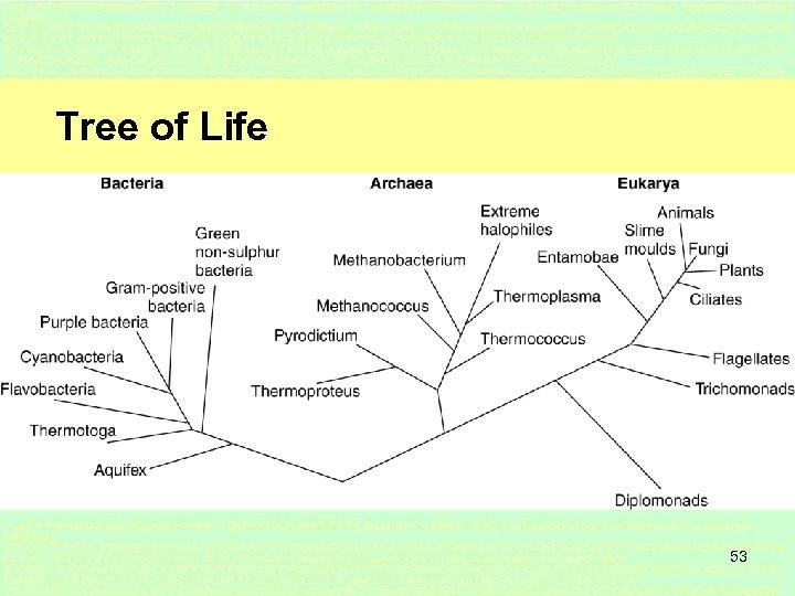 Tree of Life 53