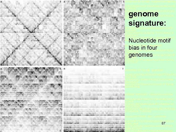 genome signature: Nucleotide motif bias in four genomes 87