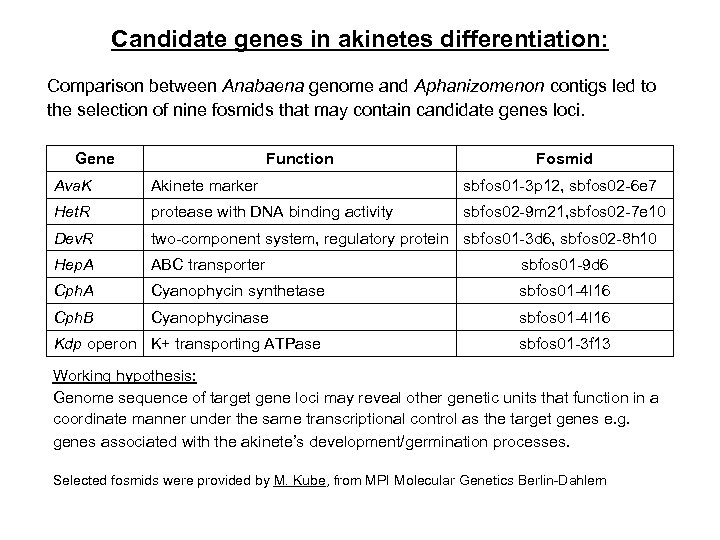 Candidate genes in akinetes differentiation: Comparison between Anabaena genome and Aphanizomenon contigs led to