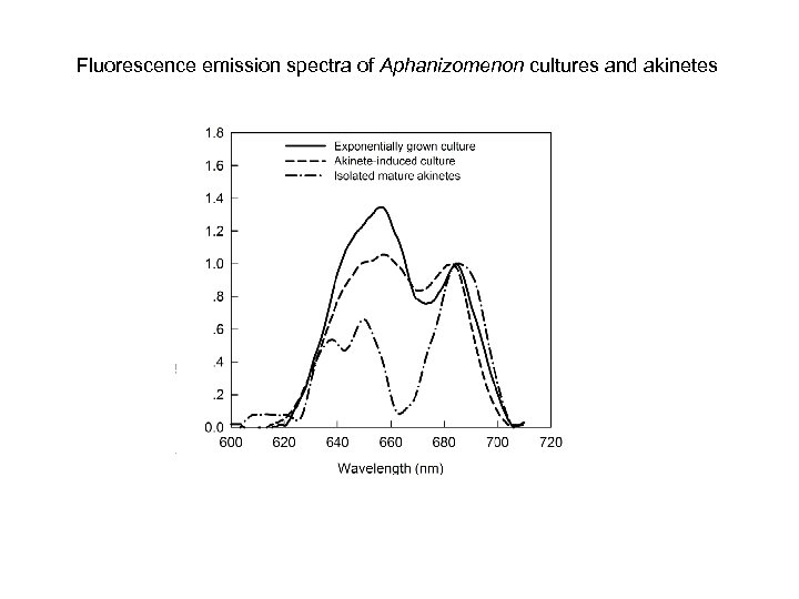 Fluorescence emission spectra of Aphanizomenon cultures and akinetes