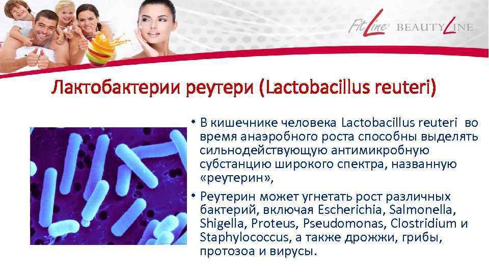 Лактобактерии реутери (Lactobacillus reuteri) • В кишечнике человека Lactobacillus reuteri во время анаэробного роста