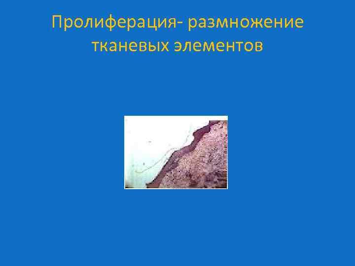 Пролиферация- размножение тканевых элементов