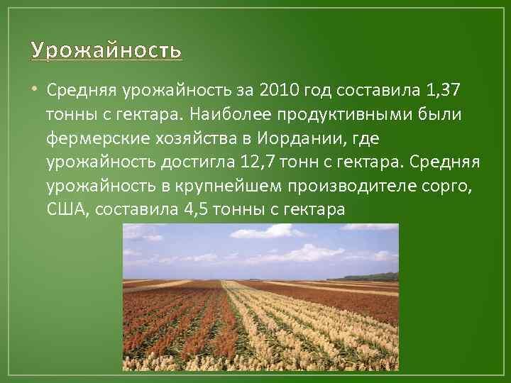 Урожайность • Средняя урожайность за 2010 год составила 1, 37 тонны с гектара. Наиболее