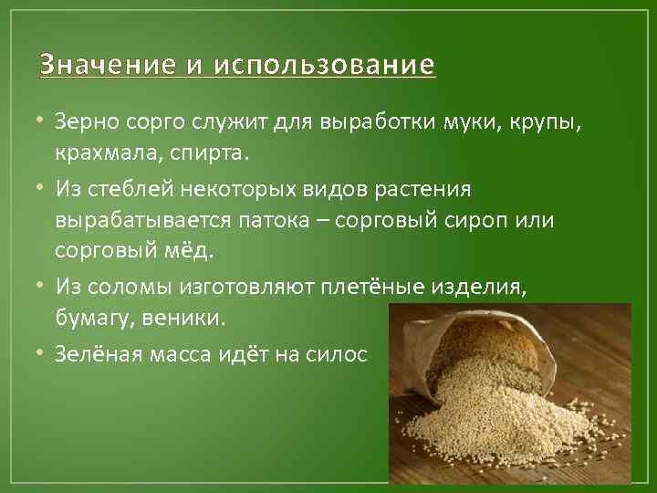 Значение и использование • Зерно сорго служит для выработки муки, крупы, крахмала, спирта. •
