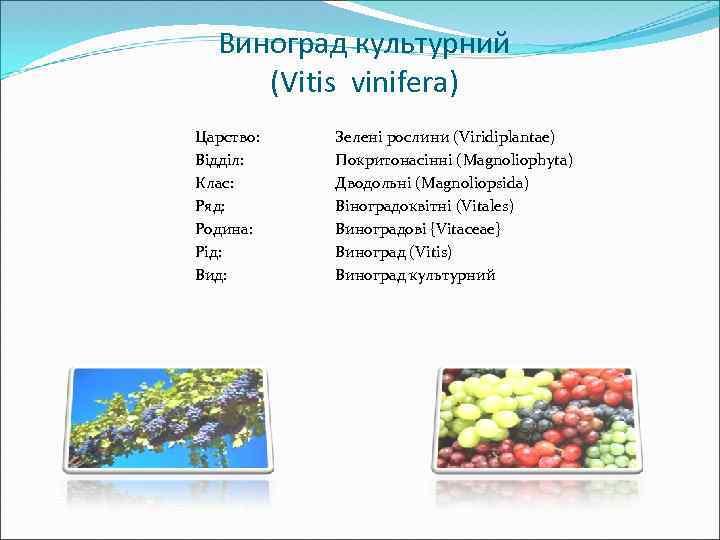 Виноград культурний (Vitis vinifera) Царство: Відділ: Клас: Ряд: Родина: Рід: Вид: Зелені рослини (Viridiplantae)