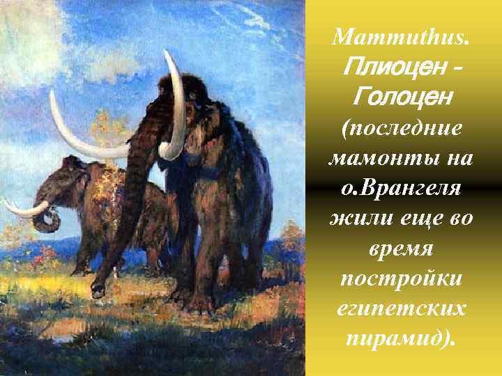 Mammuthus. Плиоцен Голоцен (последние мамонты на о. Врангеля жили еще во время постройки египетских
