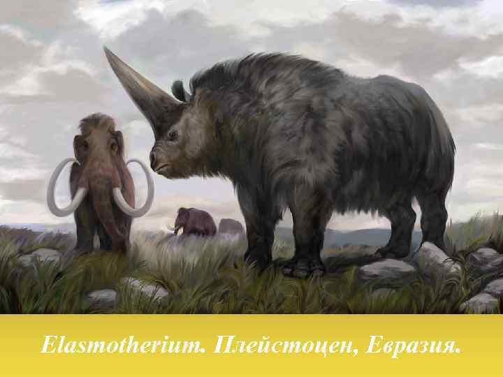 Elasmotherium. Плейстоцен, Евразия.
