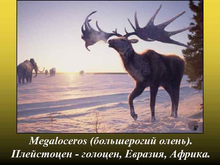 Megaloceros (большерогий олень). Плейстоцен - голоцен, Евразия, Африка.