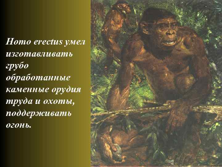 Homo erectus умел изготавливать грубо обработанные каменные орудия труда и охоты, поддерживать огонь.