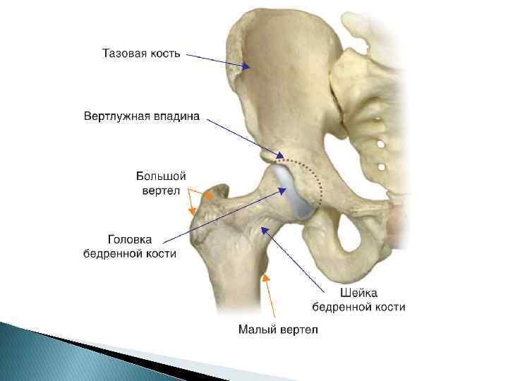 Возрастные изменения в тазобедренном суставе повреждение медиального мениска коленного сустава как лечить