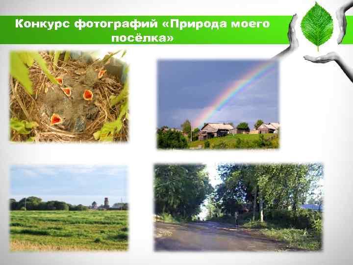 Конкурс фотографий «Природа моего посёлка»