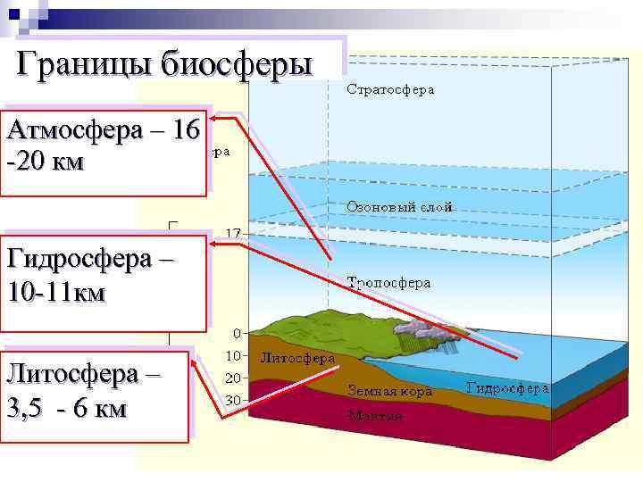 Границы биосферы Атмосфера – 16 -20 км Гидросфера – 10 -11 км Литосфера –