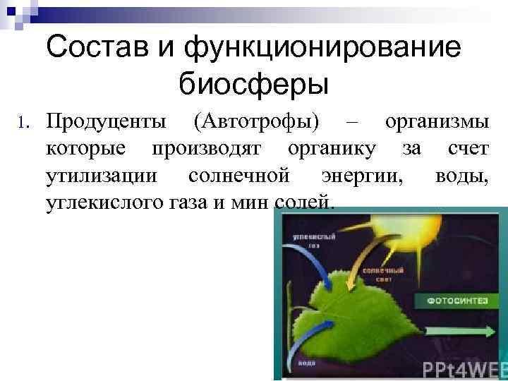 Состав и функционирование биосферы 1. Продуценты (Автотрофы) – организмы которые производят органику за счет