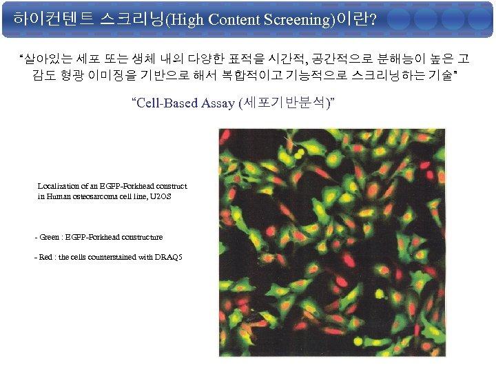 """하이컨텐트 스크리닝(High Content Screening)이란? """"살아있는 세포 또는 생체 내의 다양한 표적을 시간적, 공간적으로 분해능이"""