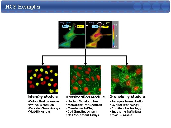 HCS Examples Intensity Module Translocation Module Granularity Module • Colocalization Assays • Protein Expression