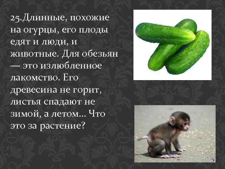 25. Длинные, похожие на огурцы, его плоды едят и люди, и животные. Для обезьян