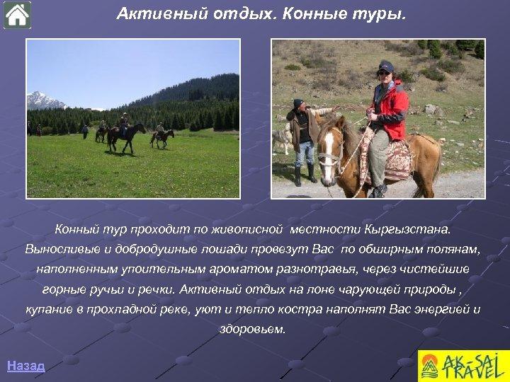 Aктивный отдых. Конные туры. Конный тур проходит по живописной местности Кыргызстана. Выносливые и добродушные